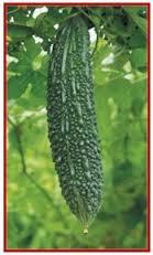 Karela - Bitter agurk