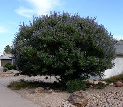 Naturlig Hormon Terapi med Kyskhedstræ